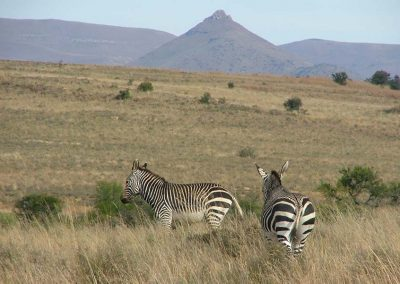 cradock-activities-national-zebra-park